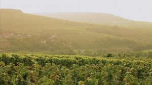 Moët & Chandon – Wine Credo